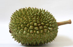 20101221durian1