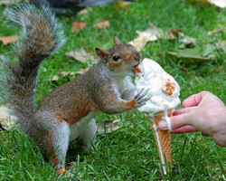 A2014719squirrelicecreamconefourhoc